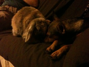 lapin chien calin caramelle baldie
